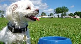 dog-walk-service