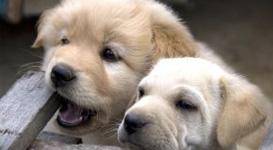 puppy-care-service